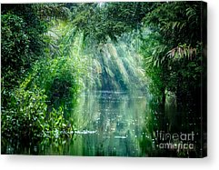 Rain Forest Acrylic Prints