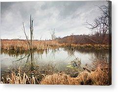 Marsh Grass Acrylic Prints