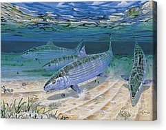 Angel Fishes Acrylic Prints