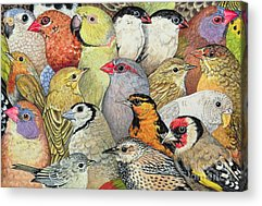 Finch Acrylic Prints