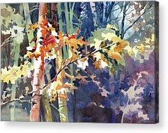 Maple Season Paintings Acrylic Prints