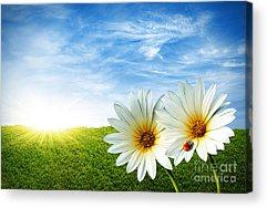 Sunny Skies Acrylic Prints
