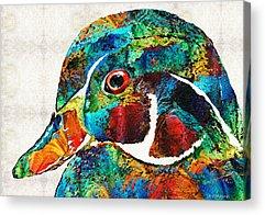 Wood Duck Paintings Acrylic Prints