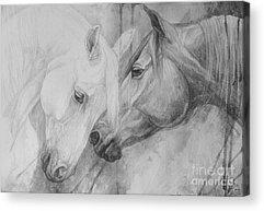 White Horse Acrylic Prints