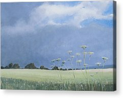Cow Parsley Acrylic Prints