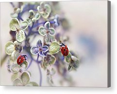 Ladybug Acrylic Prints