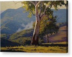 Koala Acrylic Prints