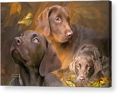Canine Mixed Media Acrylic Prints