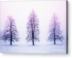 Winter Trees Photographs Acrylic Prints