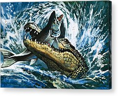 Alligator Acrylic Prints
