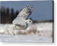 Winter Birds Acrylic Prints