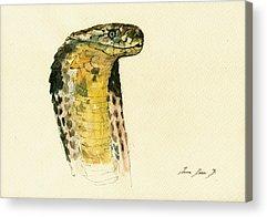 Snake Acrylic Prints