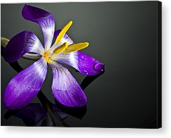 Single Flower Acrylic Prints
