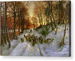 Sheep Acrylic Prints
