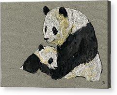 Pandas Acrylic Prints