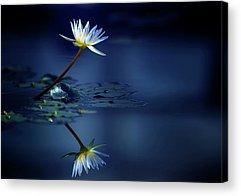 Water Lilies Acrylic Prints