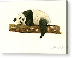 Panda Acrylic Prints
