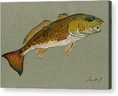 Redfish Acrylic Prints