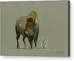 Bison Acrylic Prints
