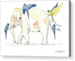 Macaw Acrylic Prints