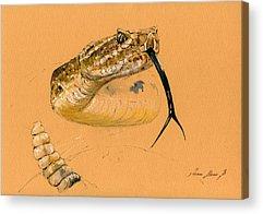 Brown Snake Acrylic Prints