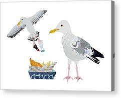 Flying Seagull Drawings Acrylic Prints