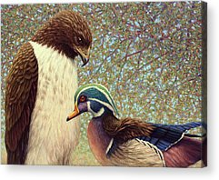 Hawk Acrylic Prints