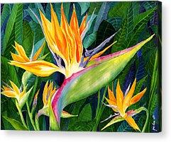 Heliconia Acrylic Prints