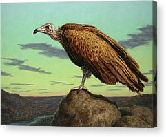 Vulture Acrylic Prints