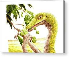Paleozoology Acrylic Prints