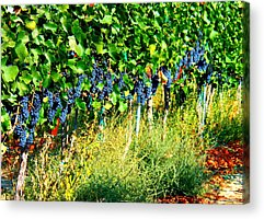 Windy Point Vineyards Acrylic Prints