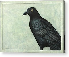 Blackbird Acrylic Prints