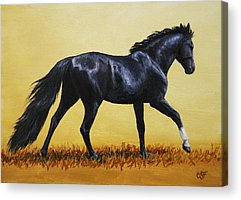 Canter Paintings Acrylic Prints