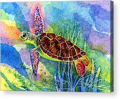Sea Life Acrylic Prints