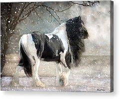 Horse Artwork Acrylic Prints