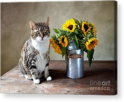 Can Acrylic Prints