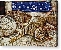David Paul Yuki Miyu Digital Art Acrylic Prints