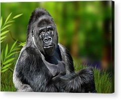 Ape Digital Art Acrylic Prints