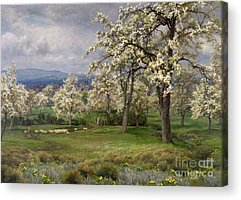 Wild Orchards Acrylic Prints