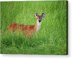 Brazos Bend State Park Acrylic Prints