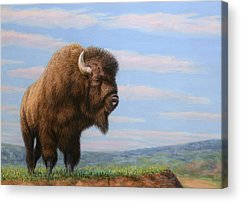Bison Acrylic Prints