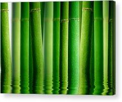 Bamboo Drawings Acrylic Prints