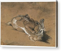 Tiger Attacks A Horse Paintings Acrylic Prints