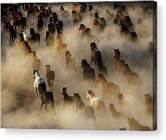 Herd Acrylic Prints