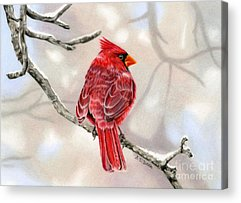 Winter Scenes Drawings Acrylic Prints