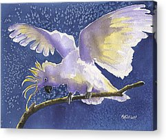 Cockatoo Acrylic Prints