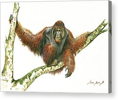 Orangutan Acrylic Prints
