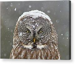Snowy Acrylic Prints