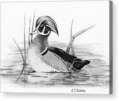 Duck Hunting Acrylic Prints