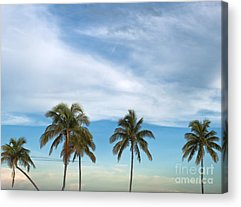 Tropical Climate Acrylic Prints